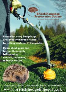 Hamworthy hedgehogs
