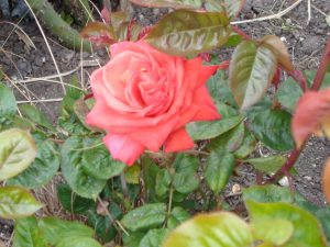 flowers hamworthy park